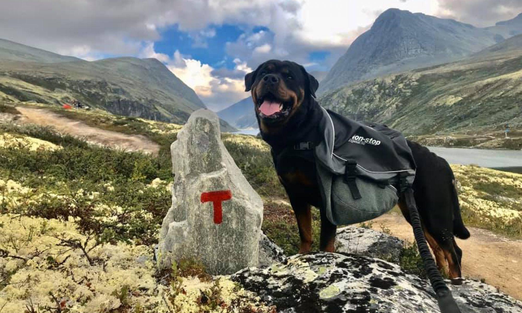Norsk Rottweilerklubb
